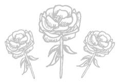 3-rosen-230